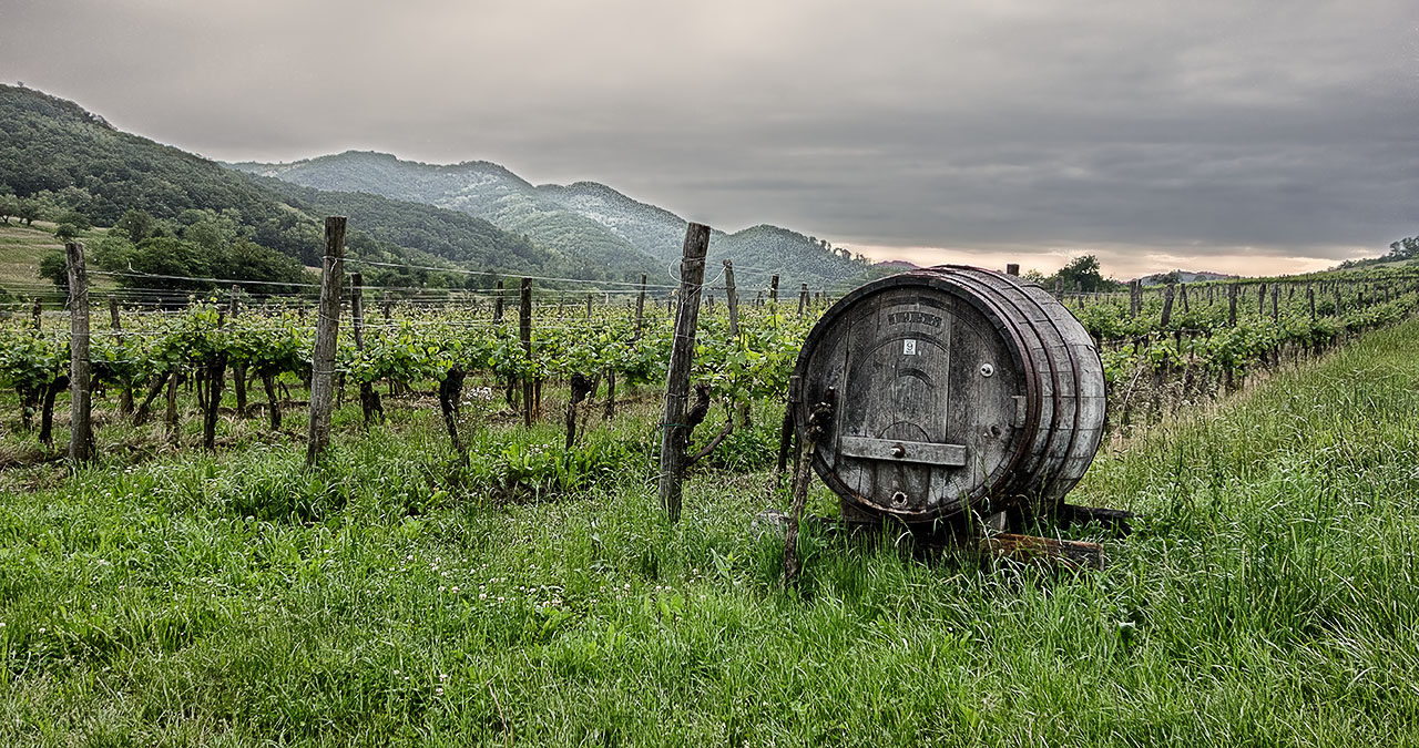 Wine country Vipava
